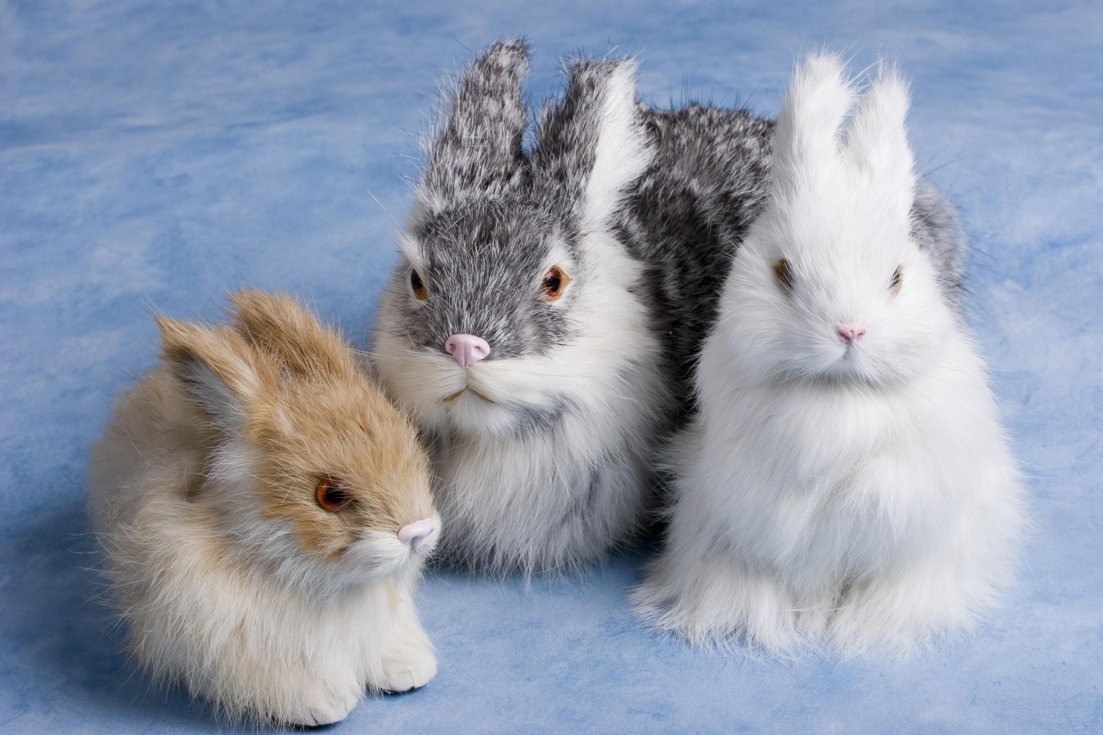 Easter Bunny History | SANDMAN SAYS