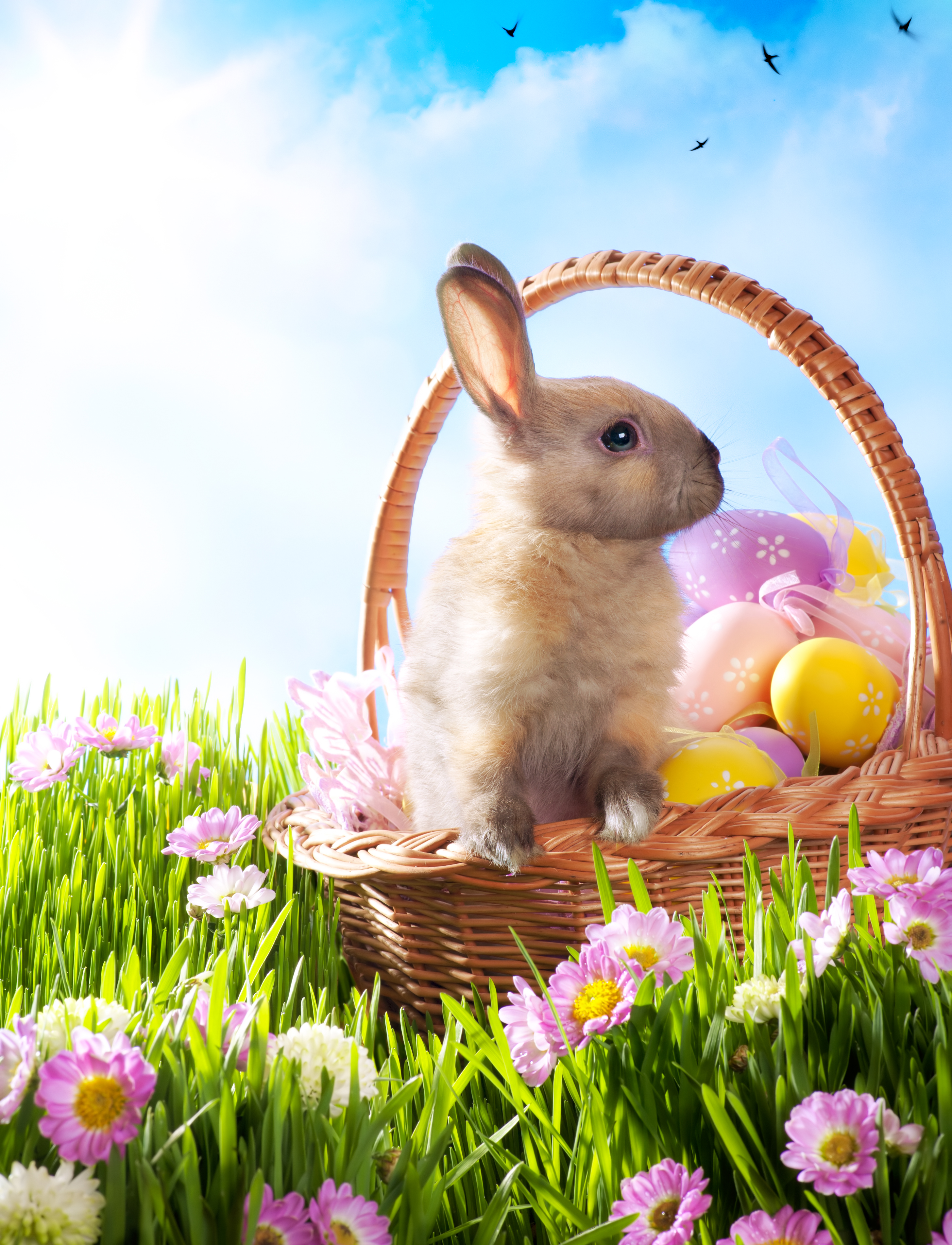 Easter Bunny History | SANDMAN SAYS for Real Easter Bunny With Eggs  111ane
