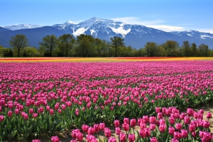 British Columbia - Agassiz