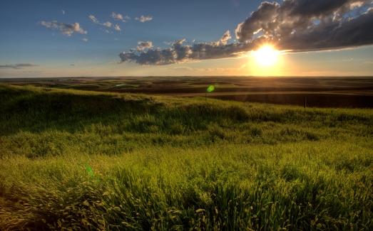 Saskatchewan fields