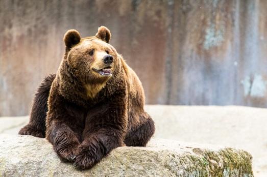 bear_107448296