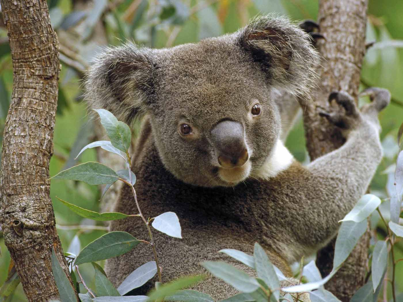 Random Animal Myths & Truths | SANDMAN SAYS